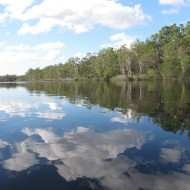 The Noosa Everglades